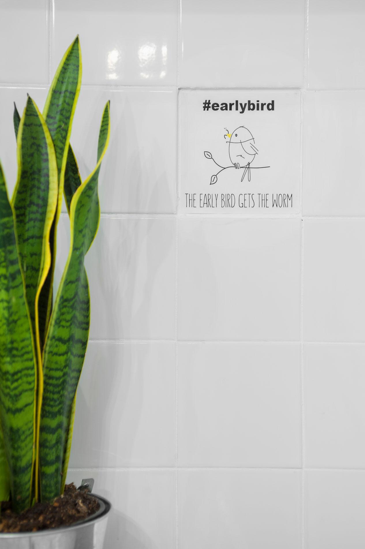 Earlybird 1